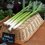 Green Garlic | Did You Know…