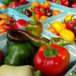 Roasted Heirloom Tomatoes