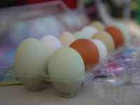 Stories Behind the Saratoga Farmers' Market's Incredible Eggs