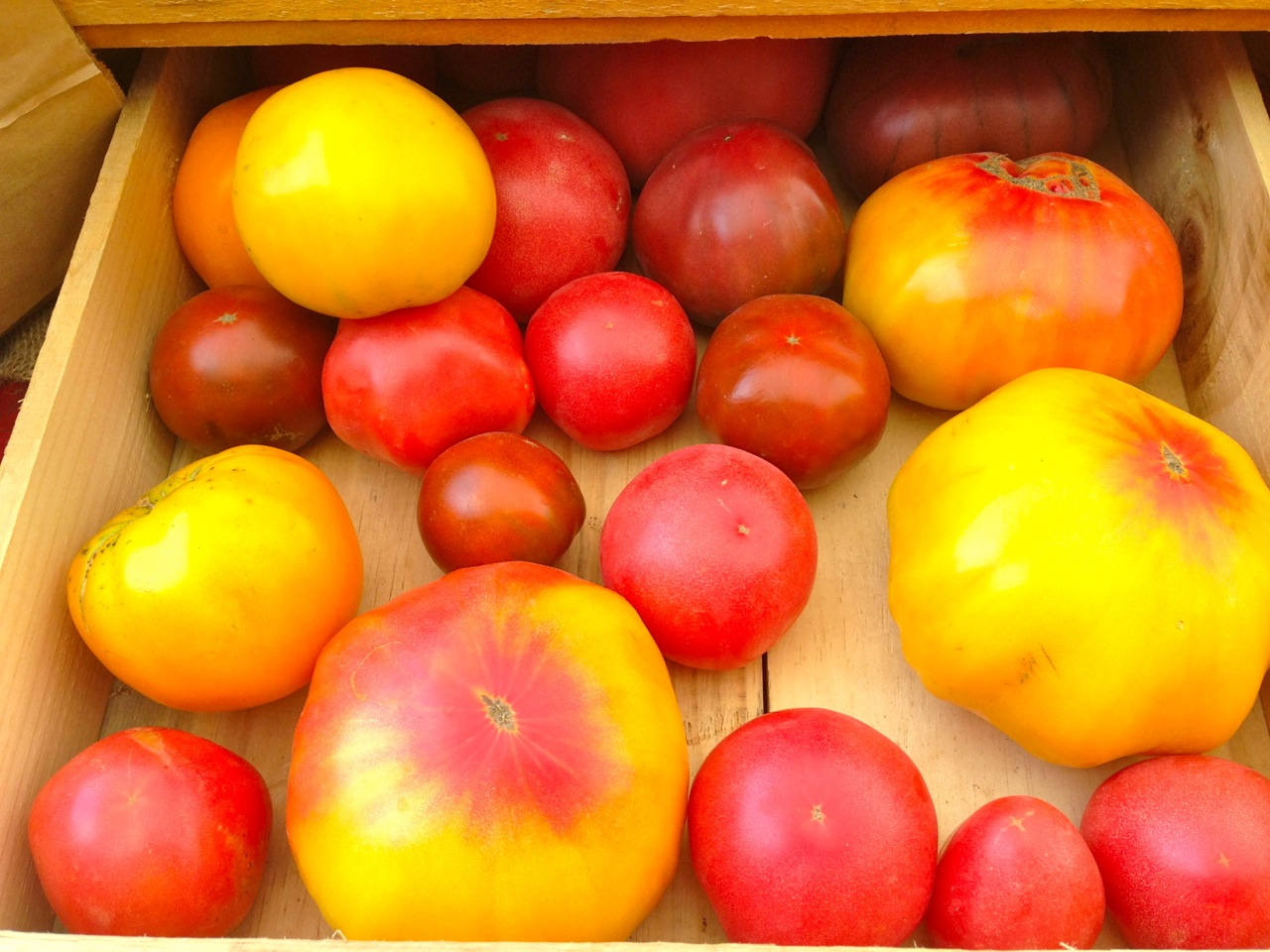 August 21: Preserving Tomatoes