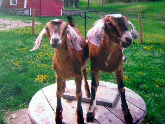 September 7-8: Washington County Cheese Tour
