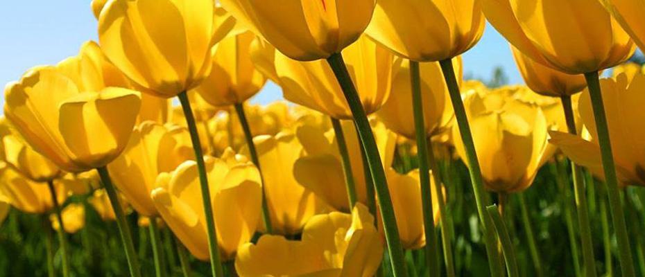 Saratoga Farmers' Market Plans Workshops to Kick off Spring