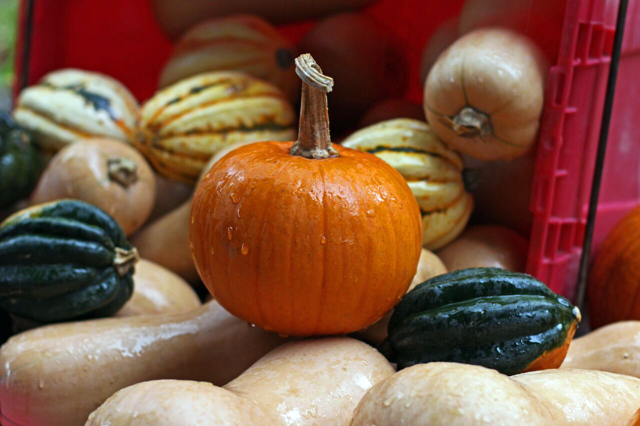 Giving Thanks to the Pumpkin