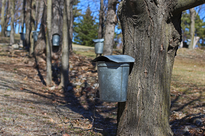 What the Full Moon in January Means for Maple Syrup