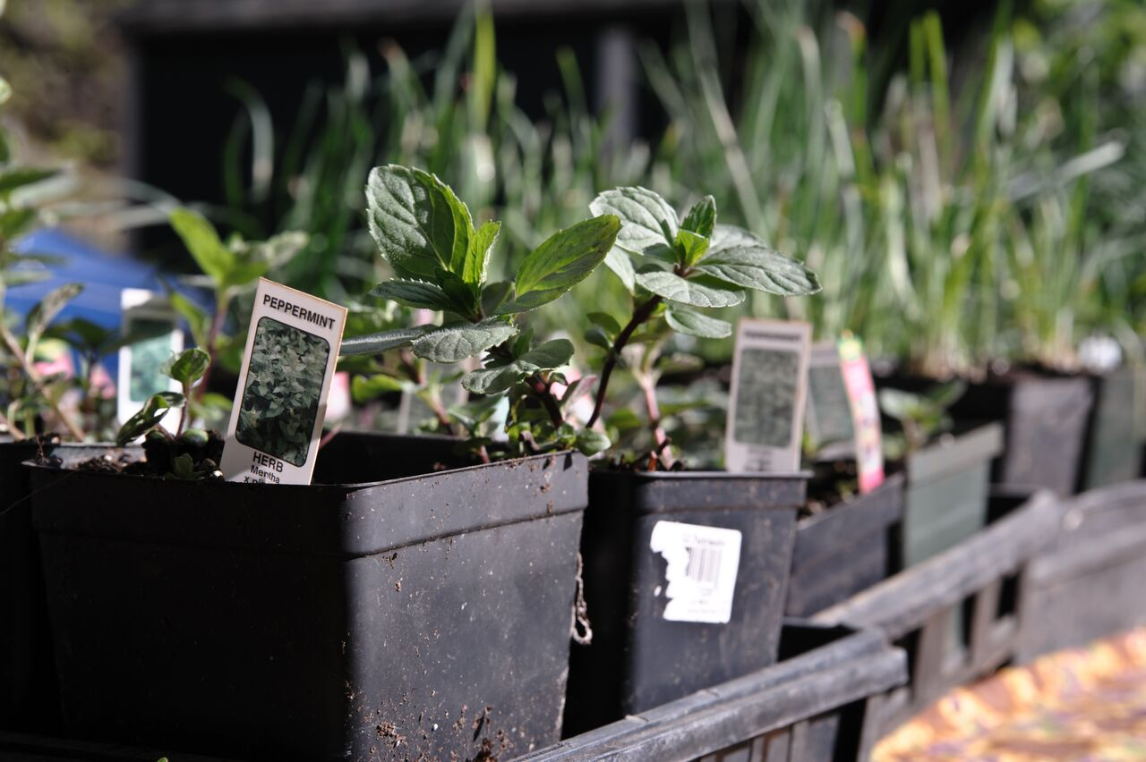 Growing a Garden When Spring Takes its Time Coming