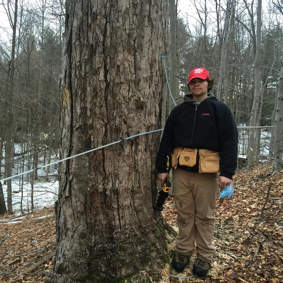 When Sap Starts to Run, Spring is About to Come