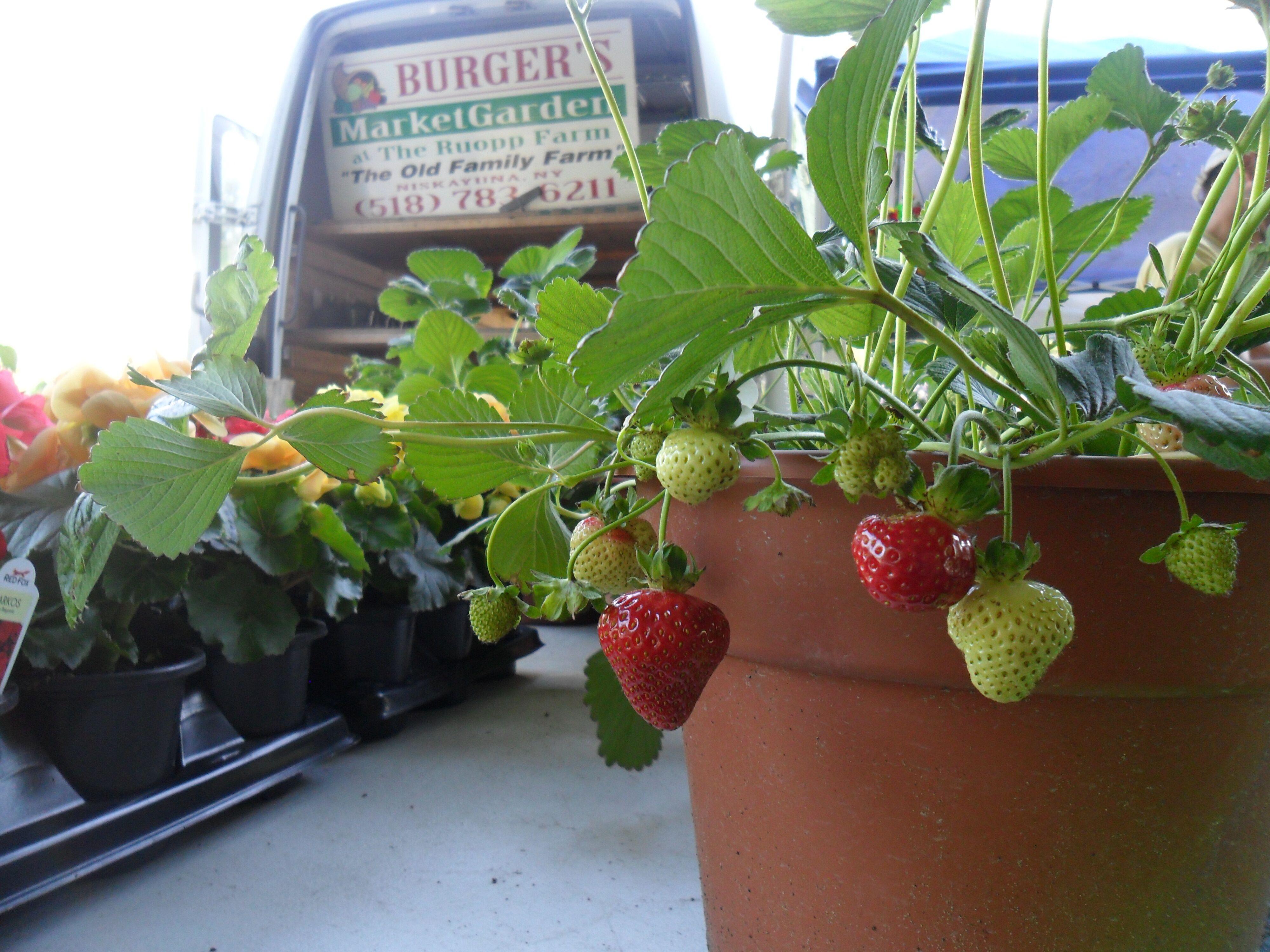Saratoga Farmers' Market - Burger Farm