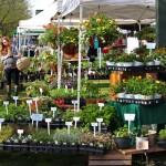 Saratoga Outdoor Farmers Market