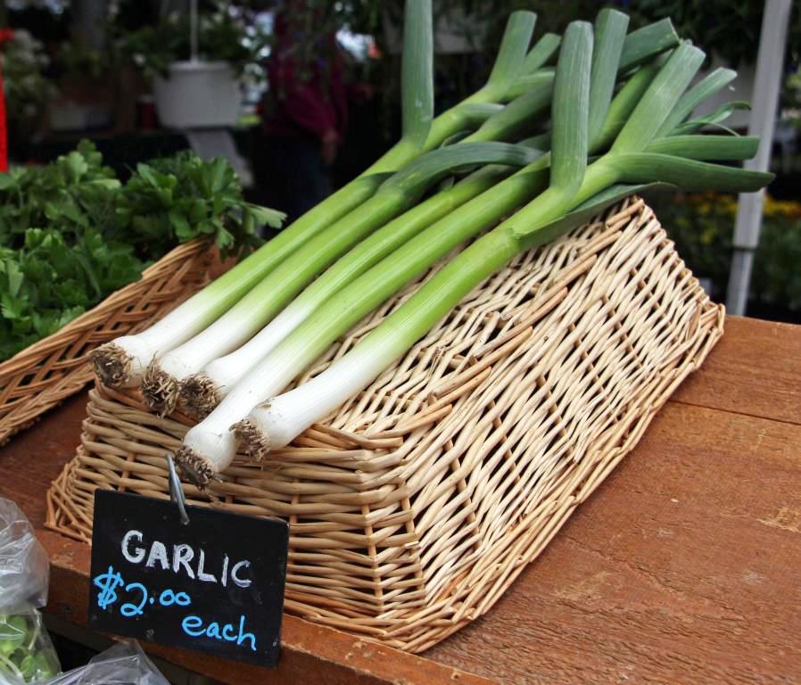 Green Onions at the Saratoga Farmers' Market