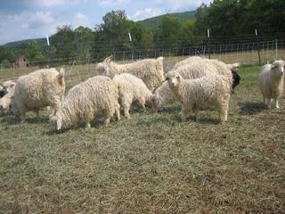Blind Buck Farm