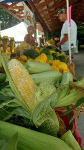 Butternut Ridge Corn Photo by Pattie Garrett