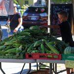 Corn at the Saratoga Farmers Market
