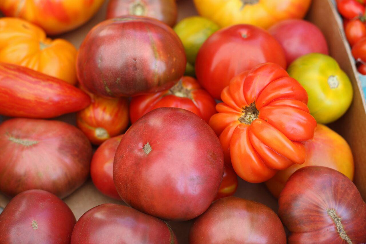 Tomatoes at the Saratoga Farmers Market